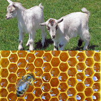 Goats & Bees (unscented)