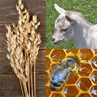 Oats, Goats & Bees (unscented)